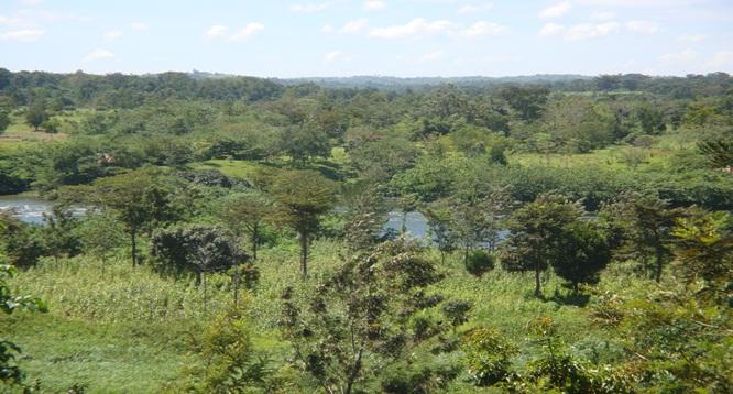 Lloyds forex bureau ltd uganda