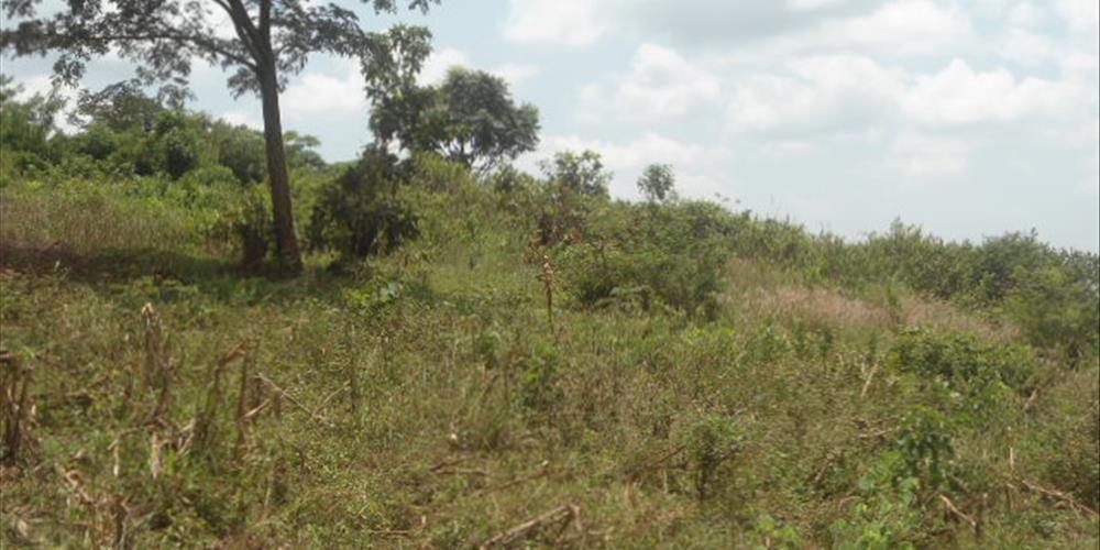 RS10218,Bugema-Wakiso