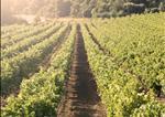 Global Vineyard IndexGlobal Vineyard Index - 2013
